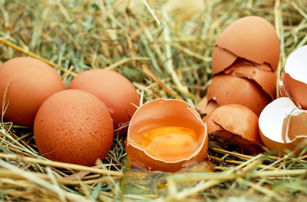Faut il manger des œufs ?